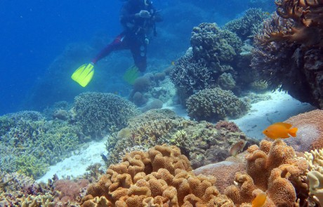 Scuba Diver on Coral Reef in Moalboal, Cebu