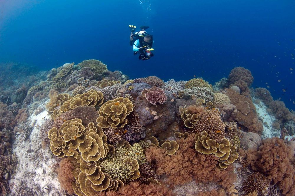 Underwater Photography in Moalboal, Cebu, Philippines: UW Photographer on top of a coral reef