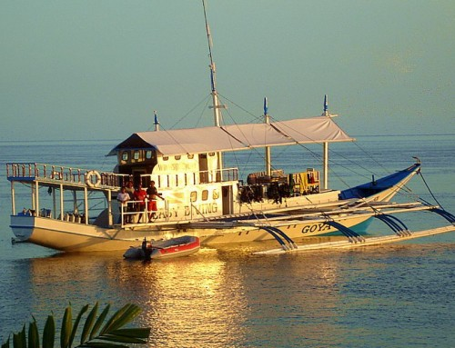 Visayan Dive Safari & Liveaboards new season offers