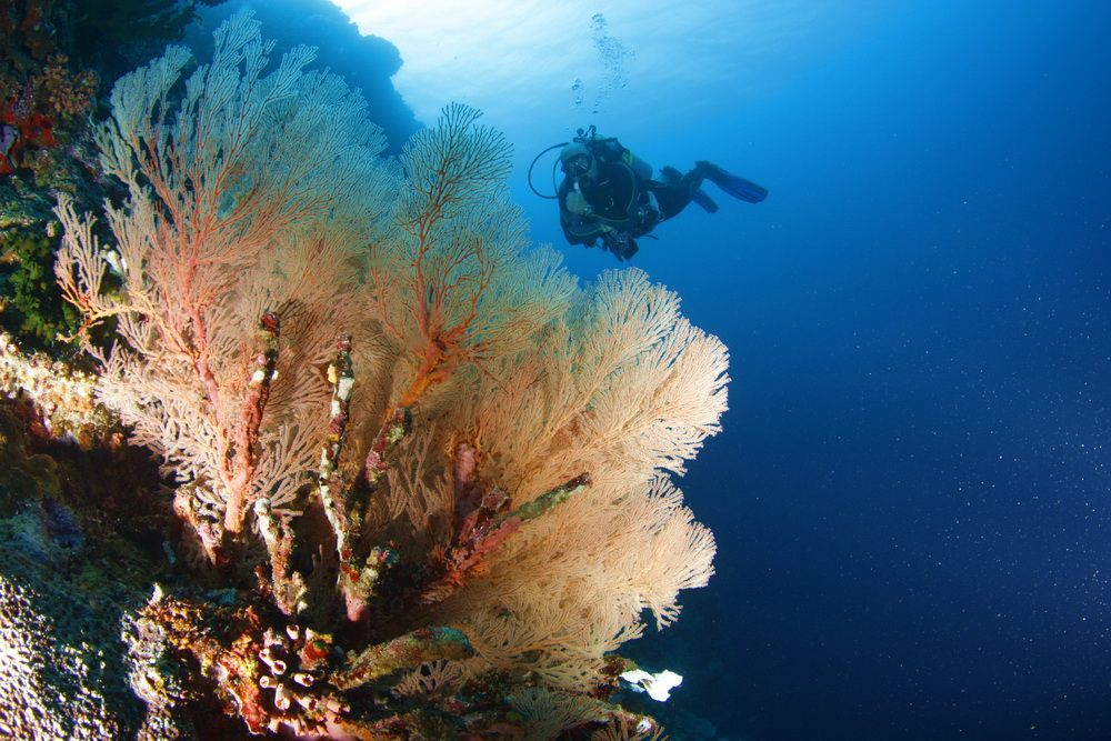 Diver on coral reef in Moalboal