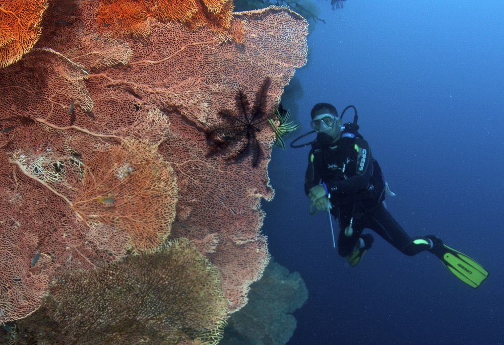 Scuba Diver with Giant Sea Fans in Moalboal, Cebu, Philippines