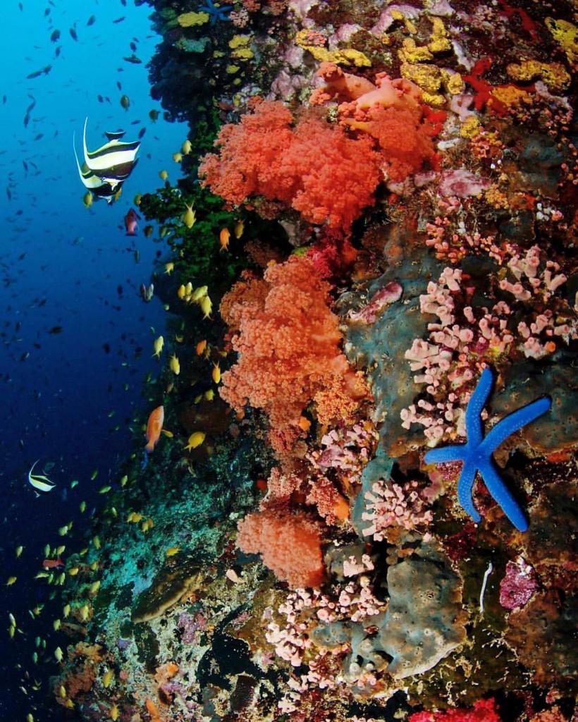 Pescador Island Coral Reef