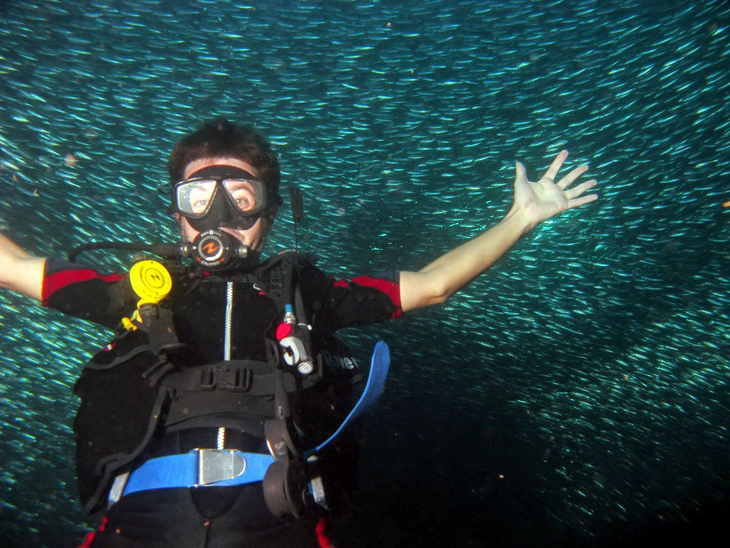 Student Diver surprised by Giant School of Sardines