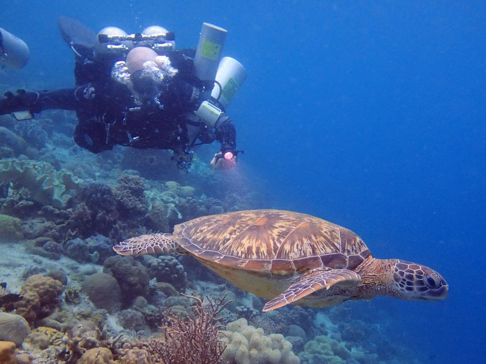 Technical Diver and turtle on decompression stop in Moalboal, Cebu, Philippines